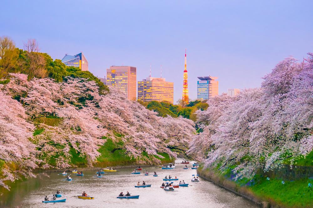 viaggio giappone tozai primavera 2020 sakura images